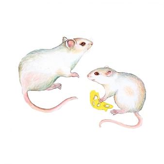 Белая мышь акварель