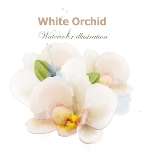 White orchid flowers watercolor