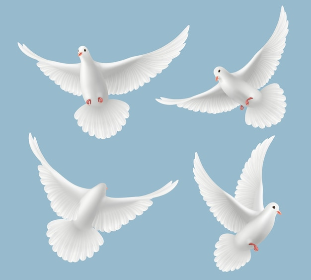 White pigeons. dove love flying birds in sky symbols of freedom and wedding realistic pictures