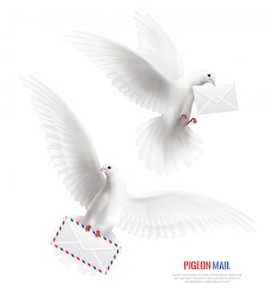 White pigeons set with envelopes