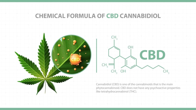 White poster with chemical formula of cbd cannabidiol and green leaf of cannabis