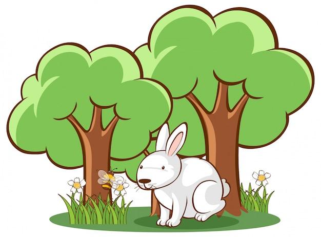 Белый кролик на белом фоне