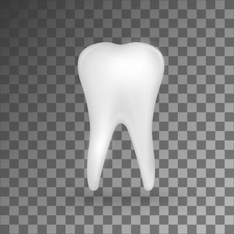 White  realistic 3d molar