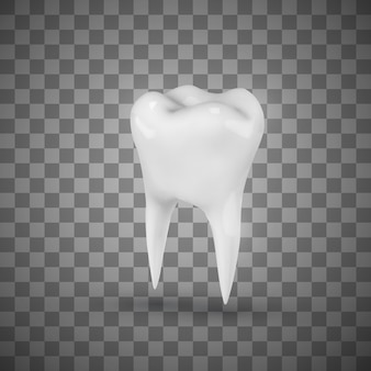White realistic molar.