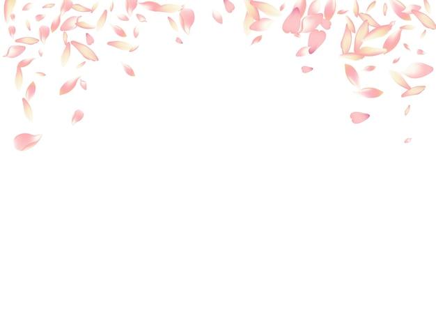 흰색 사쿠라 꽃잎 벡터 흰색 배경입니다. 핑크 무료 연꽃 꽃잎 카드. 꽃 꽃잎 섬세 한 템플릿입니다. 부드러운 사과 꽃잎 축하합니다.