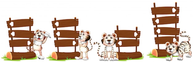 White tigers by the wooden sign