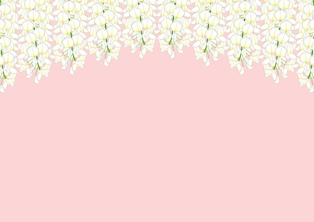 White wisteria isolated on pink background with copy space