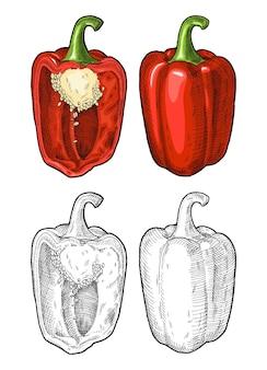 Целый и наполовину красный сладкий болгарский перец винтаж штриховки векторные цветные иллюстрации