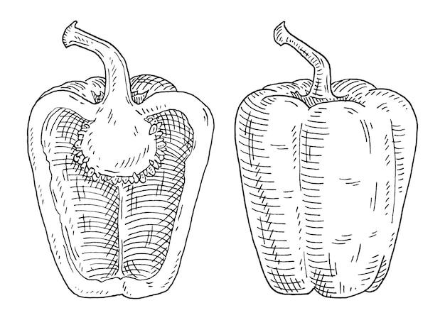 Сладкий сладкий перец целиком и наполовину. винтажные штриховки векторные черные иллюстрации.