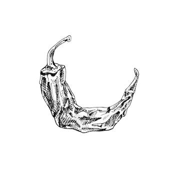 전체 마른 고추 고추. 빈티지 해칭 검은 그림.