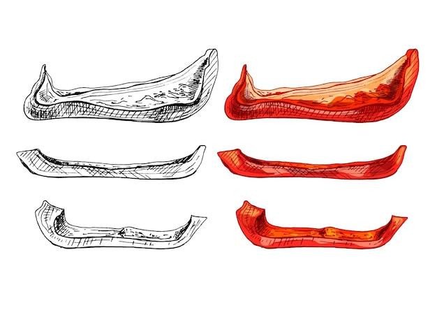 Сладкий красный болгарский перец целиком нарезать ломтиками. векторные винтажные штриховки