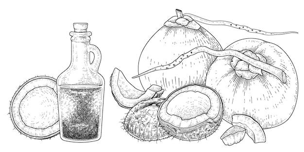 코코넛 손으로 그린 벡터 복고풍 그림의 전체 반 껍질 고기와 기름
