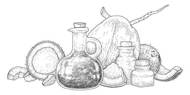 Intero mezzo guscio di carne e olio di cocco schizzo disegnato a mano.