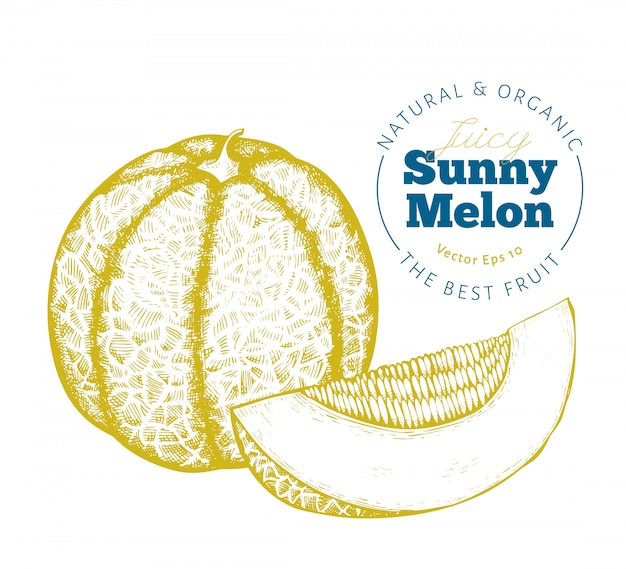 Whole melon and a piece of melon.