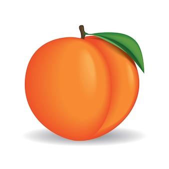 全体の桃のベクトル図