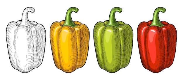 Целые красный, зеленый и желтый сладкий болгарский перец. винтажные штриховки векторные иллюстрации.