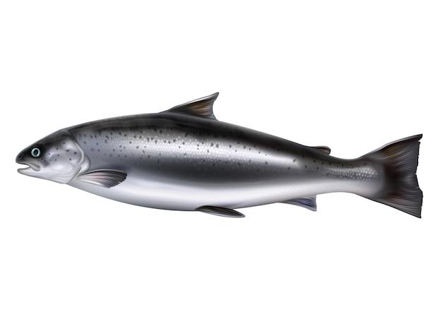 Целая рыба лосося вектор реалистичные изолированные иллюстрации. сырая красная рыба или форель.