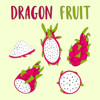 Whole and sliced dragon fruit vector illustration.