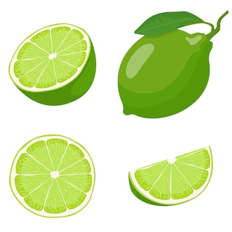 Whole and sliced lime. vector set in cartoon style.