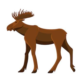 Wild adult moose