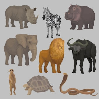 Wild african animals set, hippopotamus, elephant, giraffe, rhinoceros, turtle, buffalo, zebra, lion, snake illustrations
