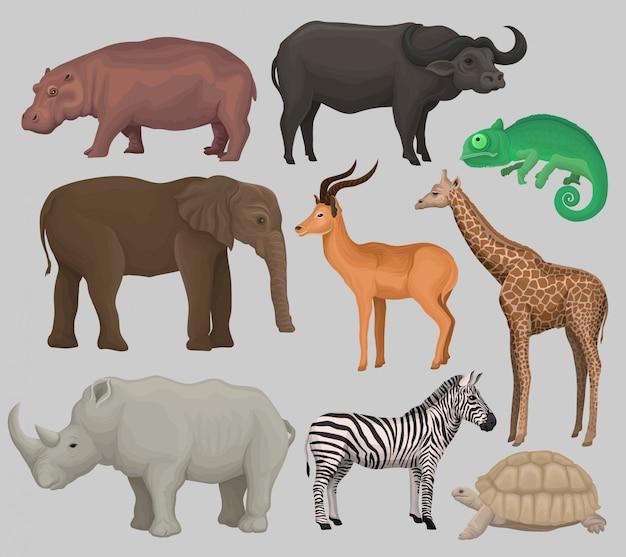 Wild african animals set, hippopotamus, hippopotamus, chameleon, elephant, antelope, giraffe, rhinoceros, turtle, buffalo, zebra illustrations