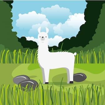 Wild alpaca in the jungle scene