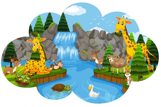 Дикое животное у водопада