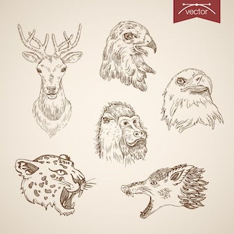 Wild animal bird icon set. engraving style pen pencil crosshatch hatching paper painting retro vintage  lineart illustration.