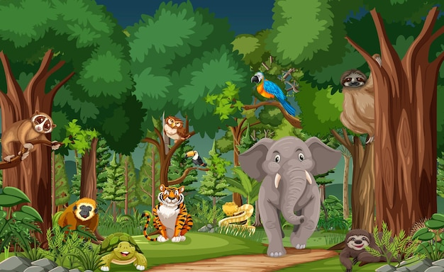 Wild animal cartoon characters in the forest scene