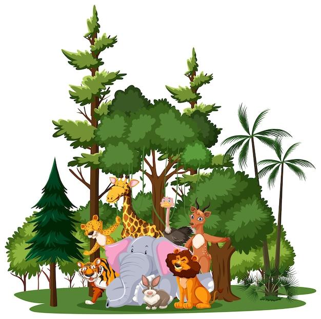 Группа диких животных или животных зоопарка с элементами природы на белом фоне