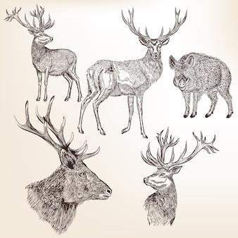 野生動物コレクション Premiumベクター