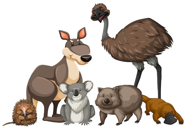 Дикие животные из австралии