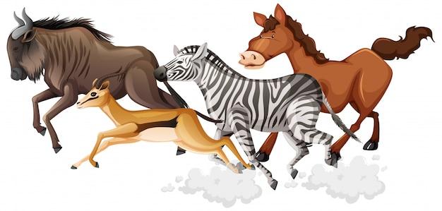 야생 동물 그룹은 흰색 배경에 고립 된 만화 스타일을 실행하고 있습니다