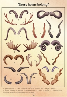 Vecchio retro manifesto educativo di varietà delle antere delle corna degli animali selvatici con le cifre e l'illustrazione corrispondente della nota a piè di pagina di nomi