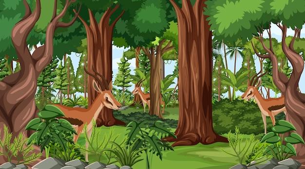 森の風景の背景に野生動物