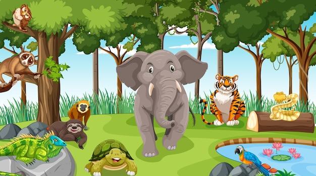 Дикие животные в лесной сцене с множеством деревьев