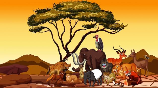 Дикие животные в пустынном поле