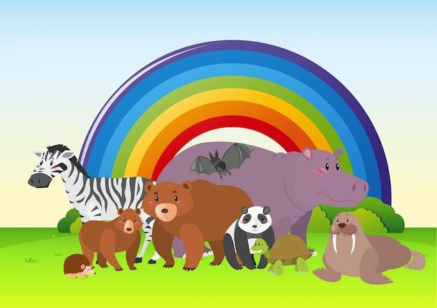 Дикие животные в поле с радуги в фоновом режиме