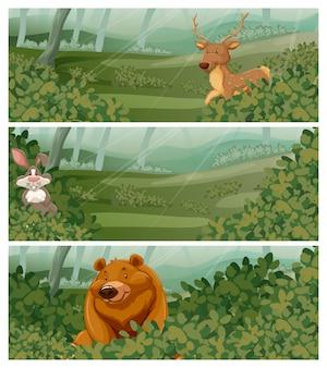 Дикие животные в лесу в дневное время