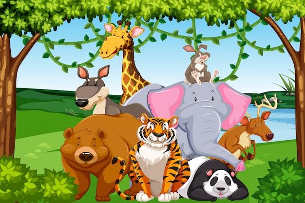 Дикие животные в лесу