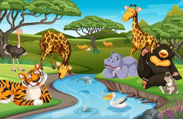 Дикие животные в джунглях