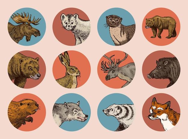 ヴィンテージスタイルの野生動物。鹿ビーバーエルクウルフベアフォックスマーテンアナグマイノシシうさぎ。