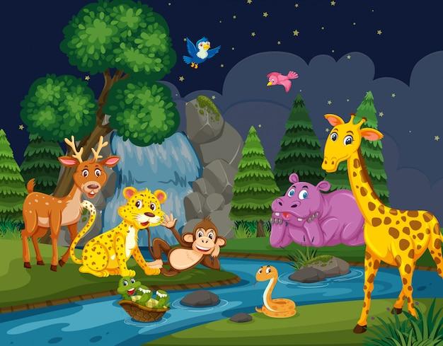 夜の森の野生動物