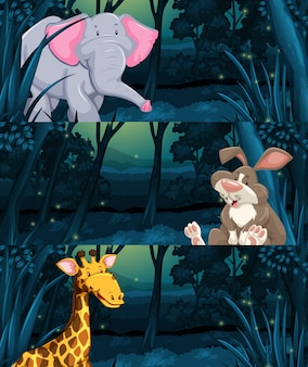 Wild animals in the jungle at night