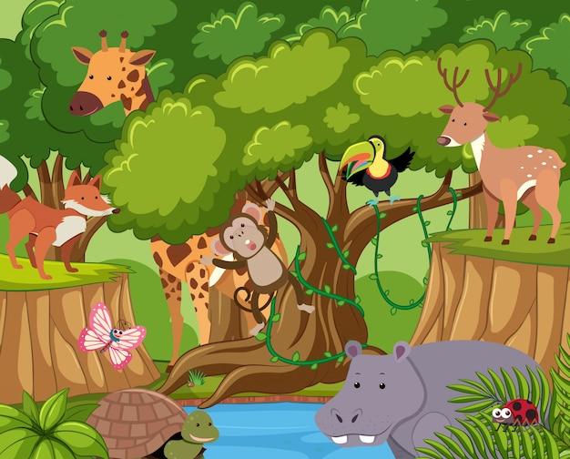 野生動物が森に住んでいる