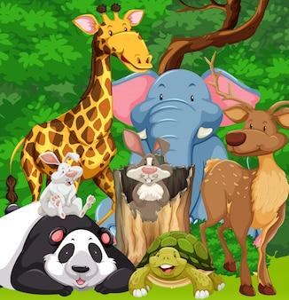 Animali selvaggi che vivono nella foresta