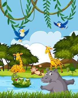 Wild animals in nature