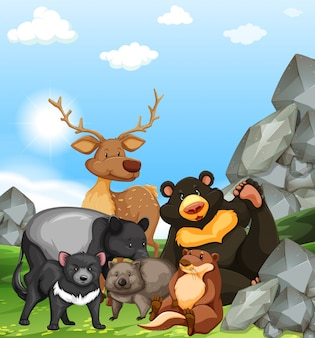 Wild animals in the park