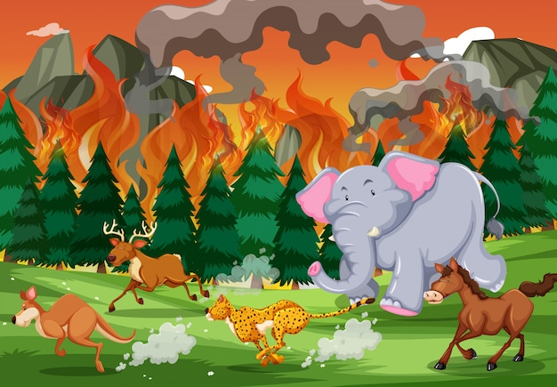 Wild animals run away from wildfire